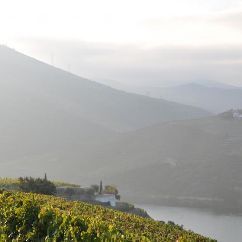 Gastronomie și vin portughez
