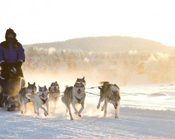 Husky Safari in Laponia